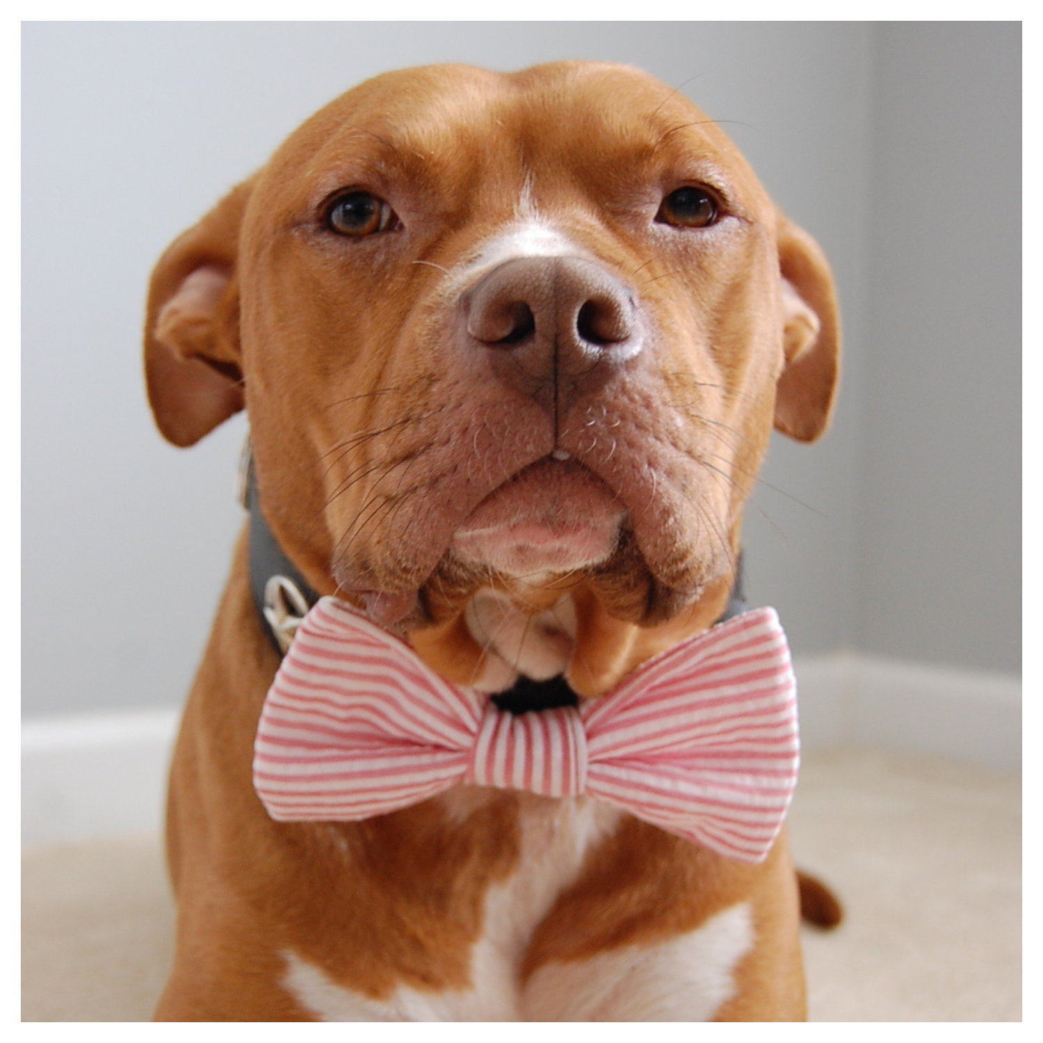 Red Seersucker Bow Tie