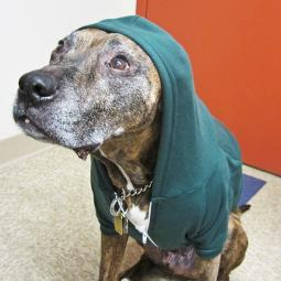 Large Green Fleece Doggie Hoodie