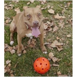 "Orange 6"" Unbreakoball for Dogs"